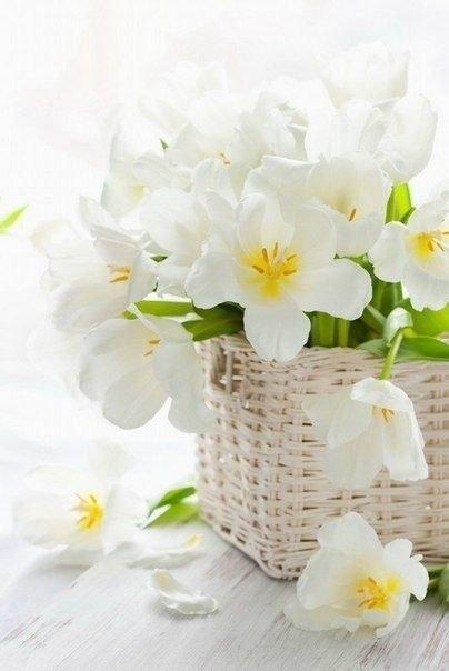 Фото цветов нежных на белом фоне